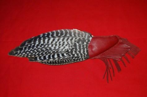 Primary flight feathers of the Wild Turkey