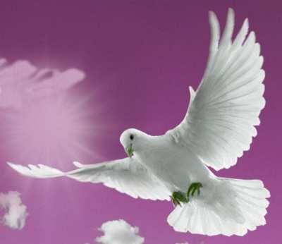 white-dove-flying