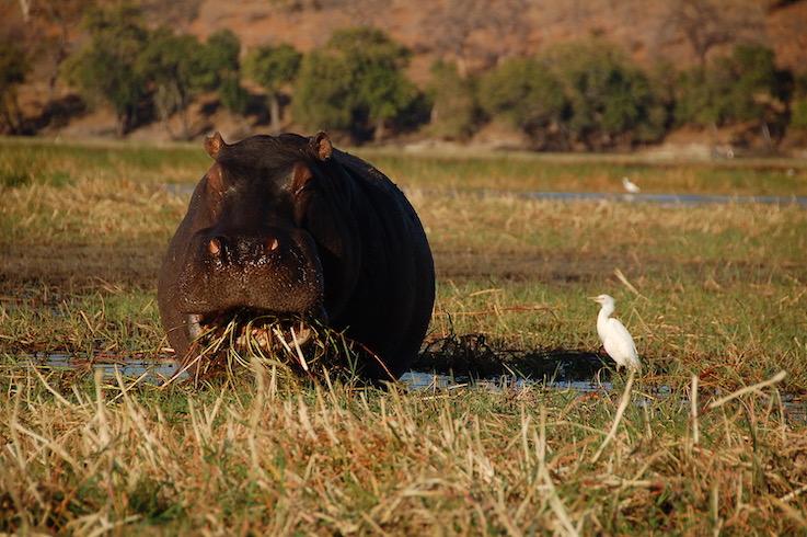 La simbiosi tra animali in Africa