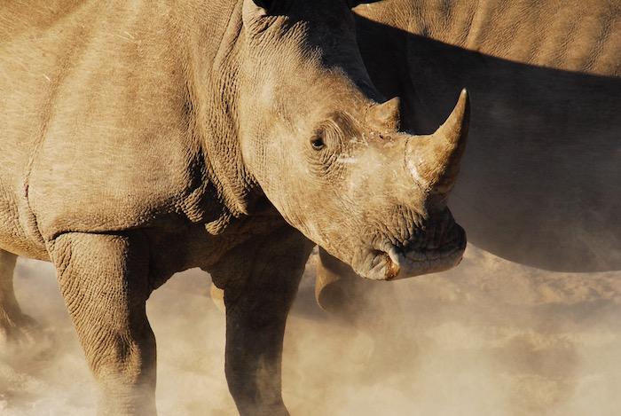 Khama Rhino Santuary rinoceronte