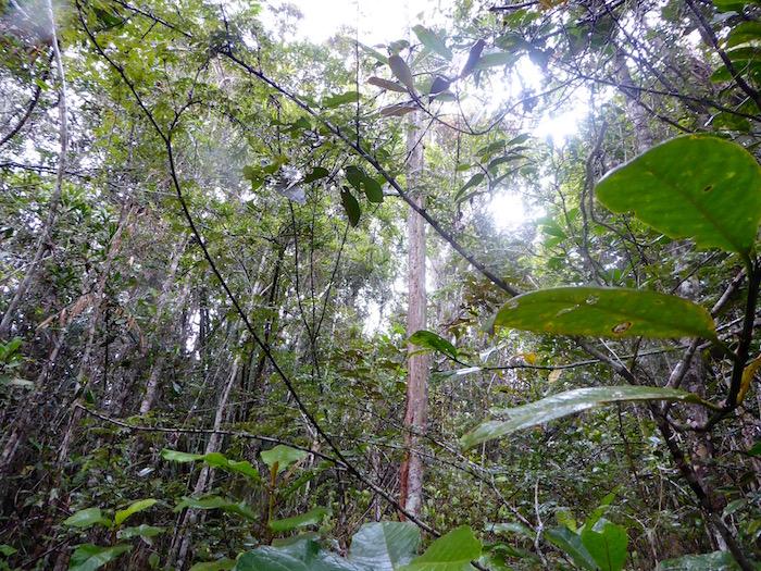 foresta, Madagascar, lemuri