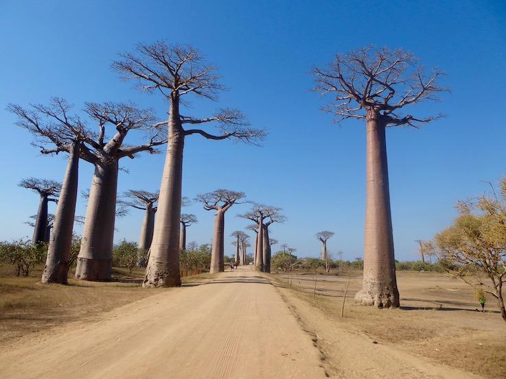 In Madagascar nella terra dei baobab