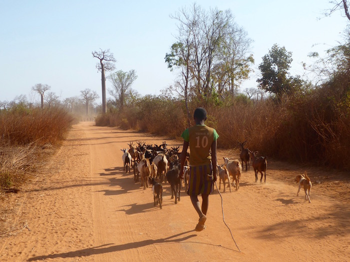 baobab, Madagascar, Africa, Soultravelling