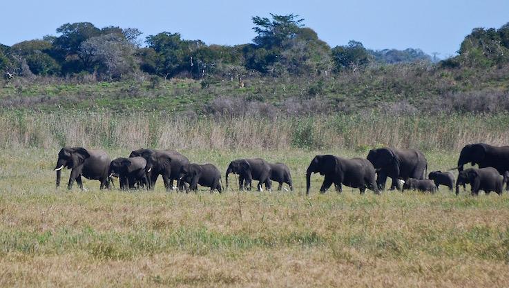 Maputo, riserva speciale degli elefanti