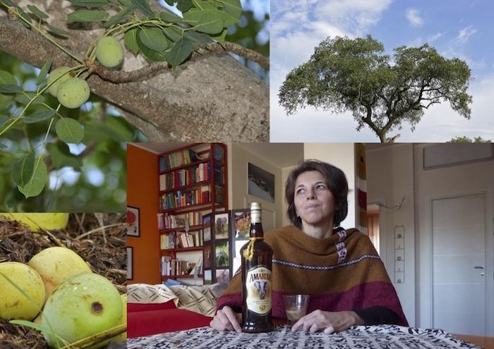 L'amarula, il liquore dall'albero degli elefanti