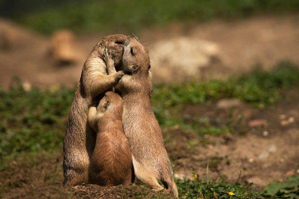 maternidade sexo depois dos filhos beijo com filho