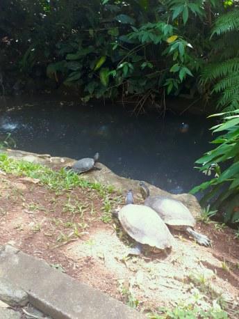 tartarugas-zoologico-gramado-e-canela
