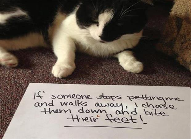 The Best Of Cat Shaming Fit For Fun