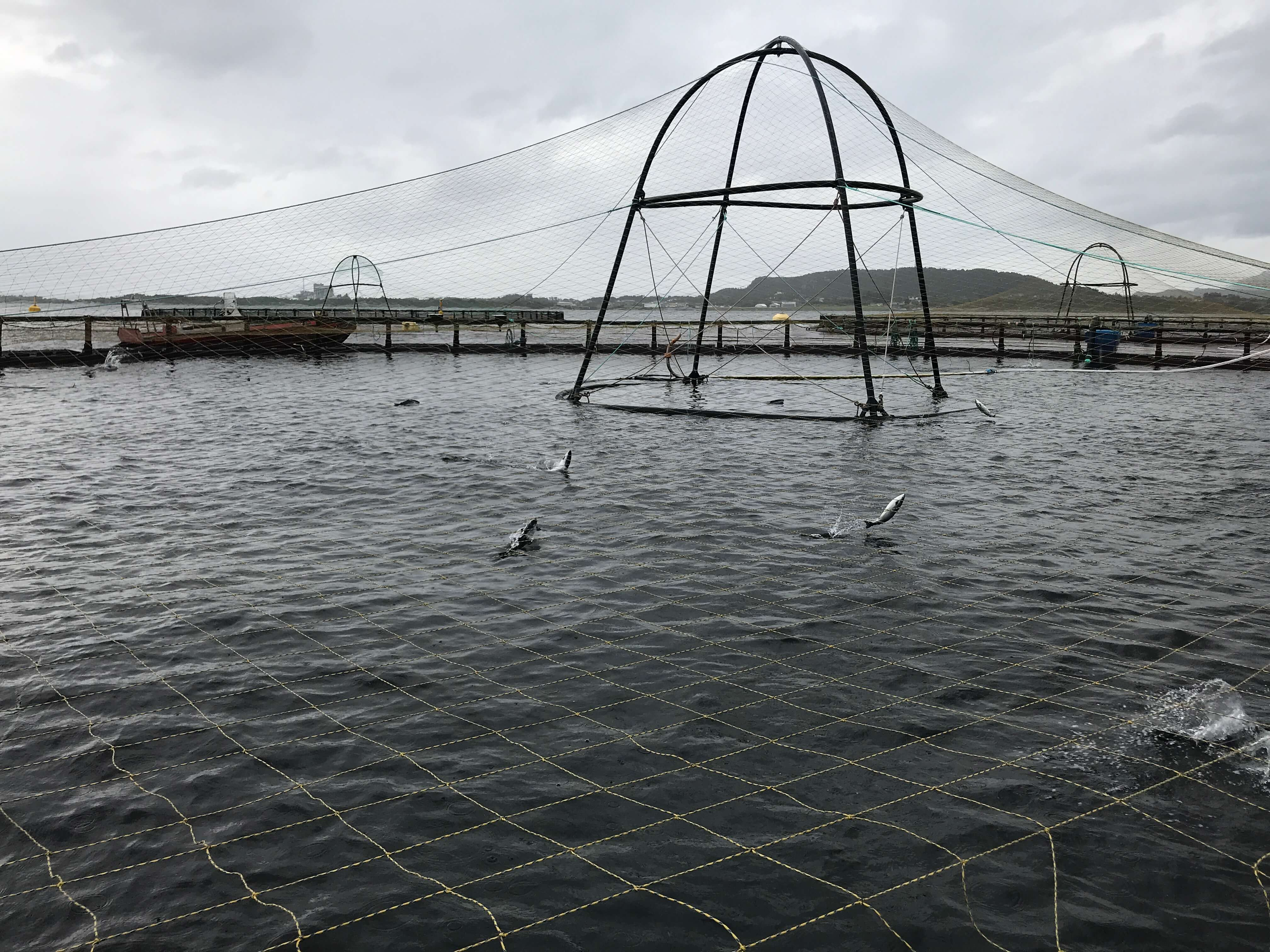 Sustainable aquaculture in Norway
