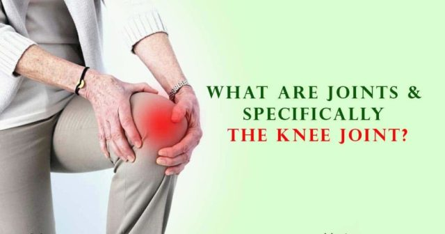 What Are Joints & Specifically The Knee Joint?