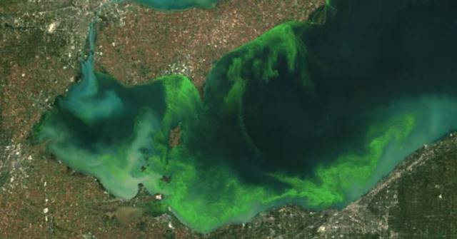 This NOAA satellite image shows an algae bloom on Lake Erie in 2011, the worst that had been seen in decades. A similar algae growth—fed by phosphorus contained in farm fertilizer runoff and sewage treatment plants—creates toxins that have contributed to oxygen-deprived dead zones that kill widlife and threaten drinking water supplies. Ohio's fourth-largest city, Toledo, told residents over the weekend not to drink the water. The ban was officially lifted on Monday morning, but worries remain about the quality of the drinking water or whether the crisis is truly over. (Photo: flickr / cc/ NOAA)