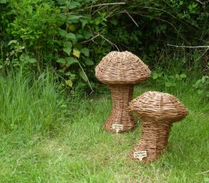 two small willow mushrooms  on grass in front of bushes