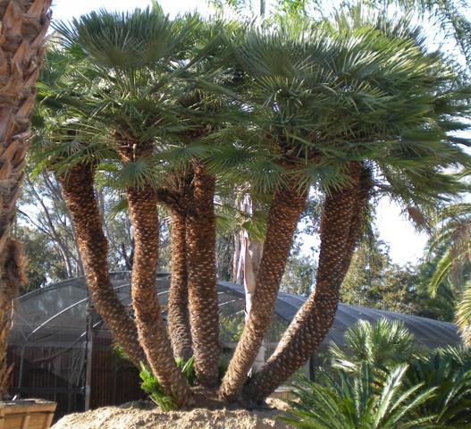 Above Ground Garden Arizona