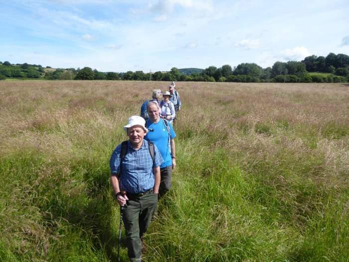 Through meadows of long grass
