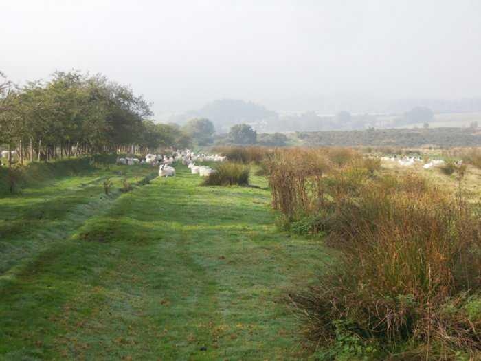 Over the misty moor