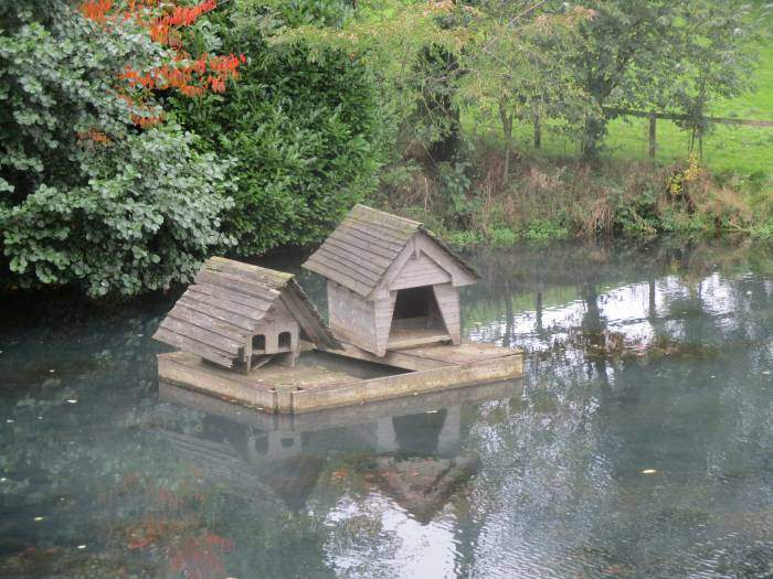 With a duck house or two