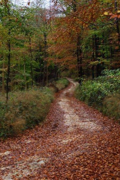 Along woodland paths