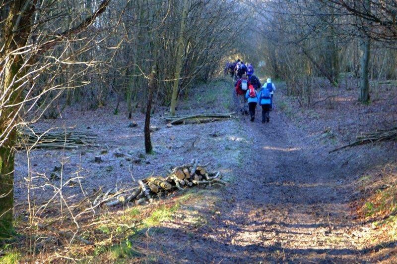 And into Siccaridge Woods