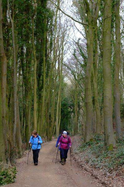 Dwarfed by tall trees
