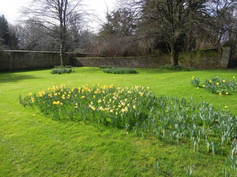 Even the daffs are all facing away from the cold wind