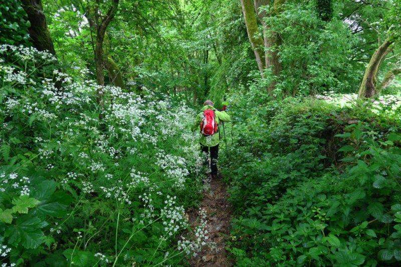 An overgrown downhill path
