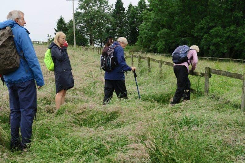Fields of long grass testing our waterproofs