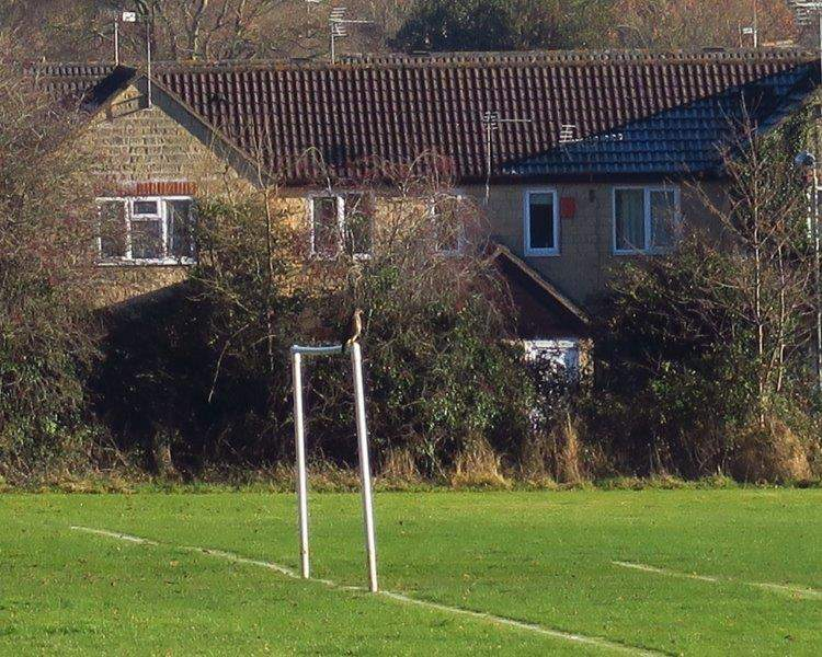 Looks like a buzzard on the goal post
