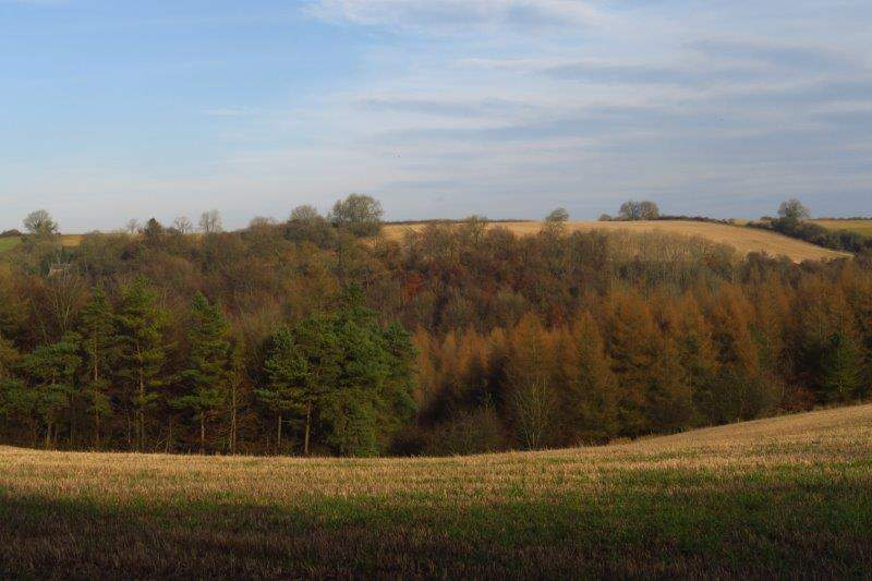 Looking across to woods as we make our way back to the pub