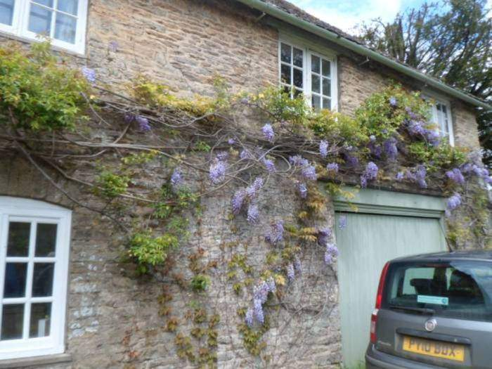 Wisteria abounds