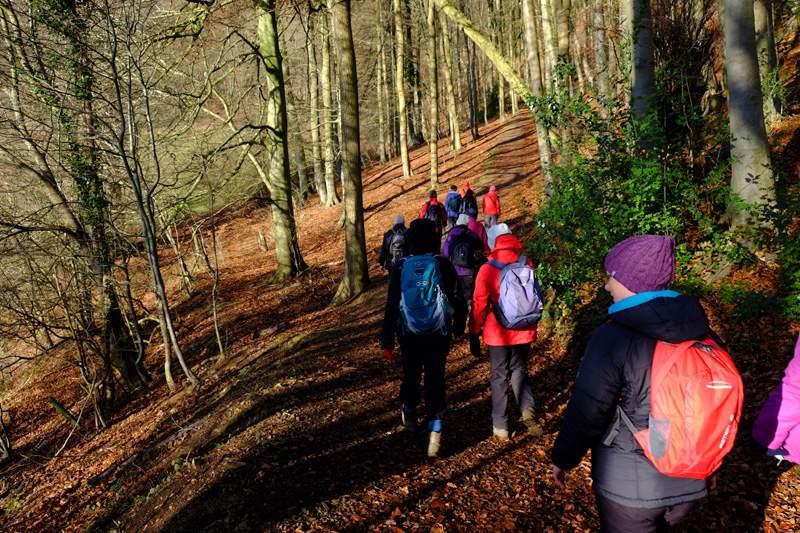 Walking through Pitchcombe Woods