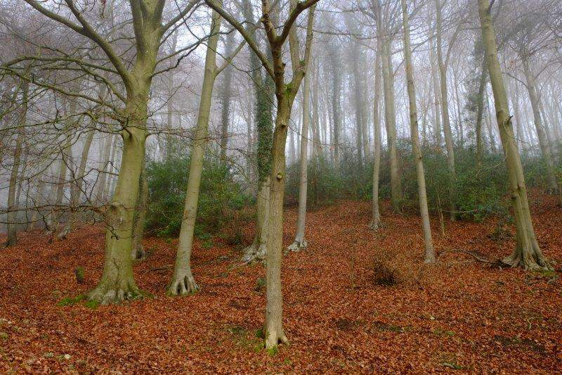 Trees standing sentry