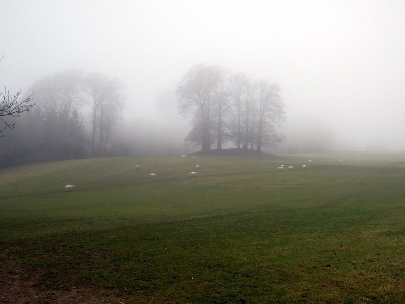 Misty by the long barrow and the Tingle Stone