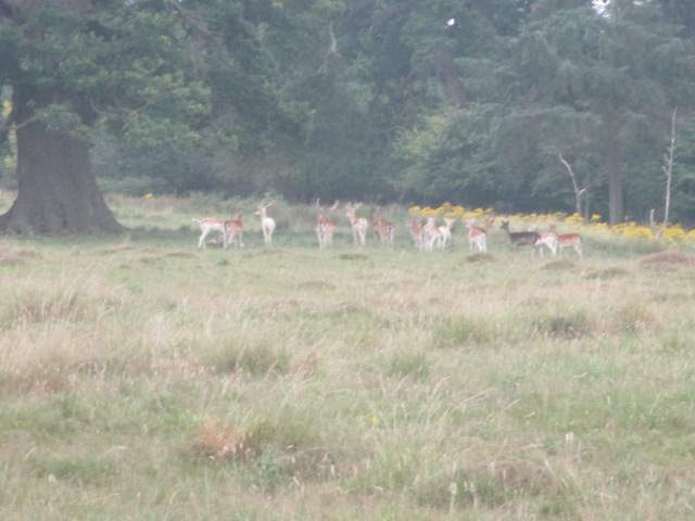 Then we are soon up in the Deer Park