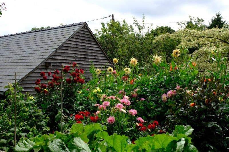 Garden specialisilng in Dahlias