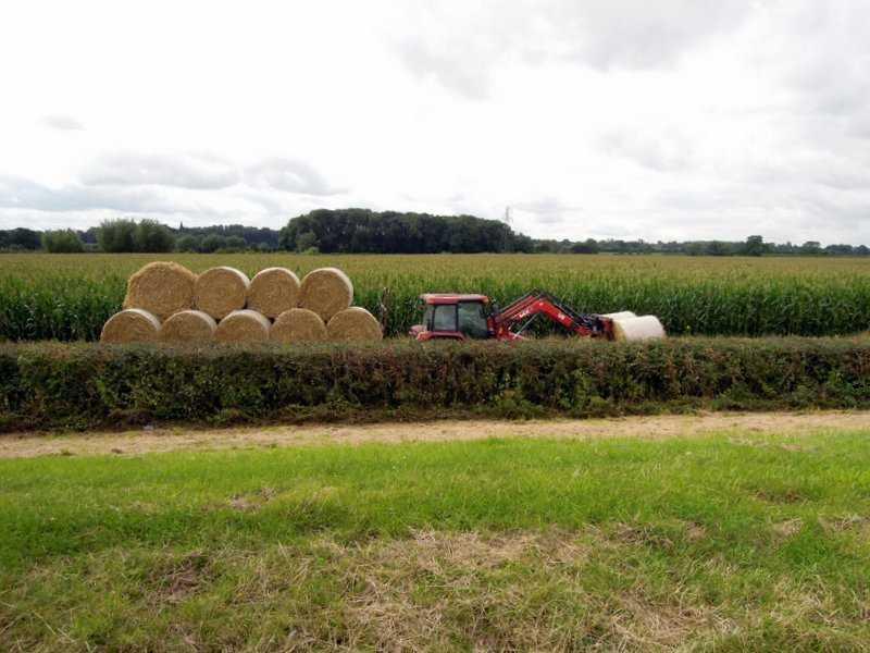 Farmer is busy