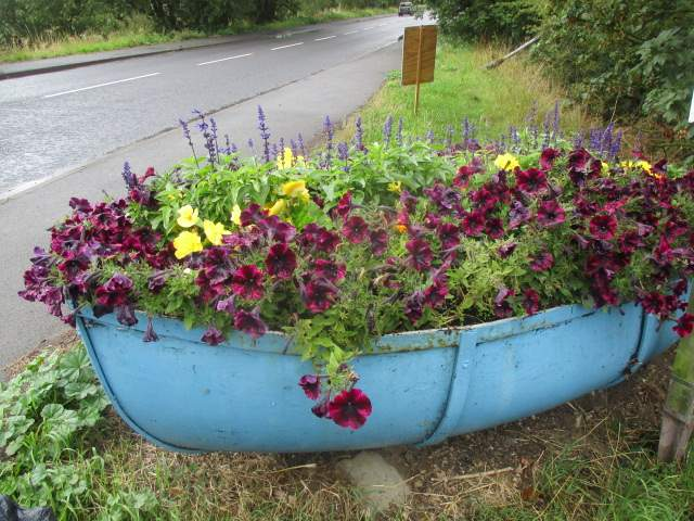 A boatful of pansies