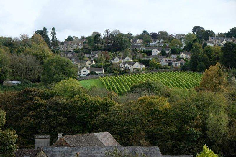 Catching sight of the vineyard across the valley