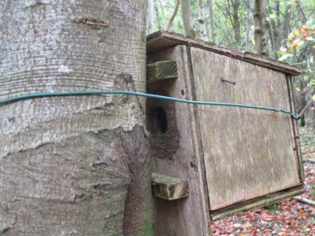 The hole at the back near the bark
