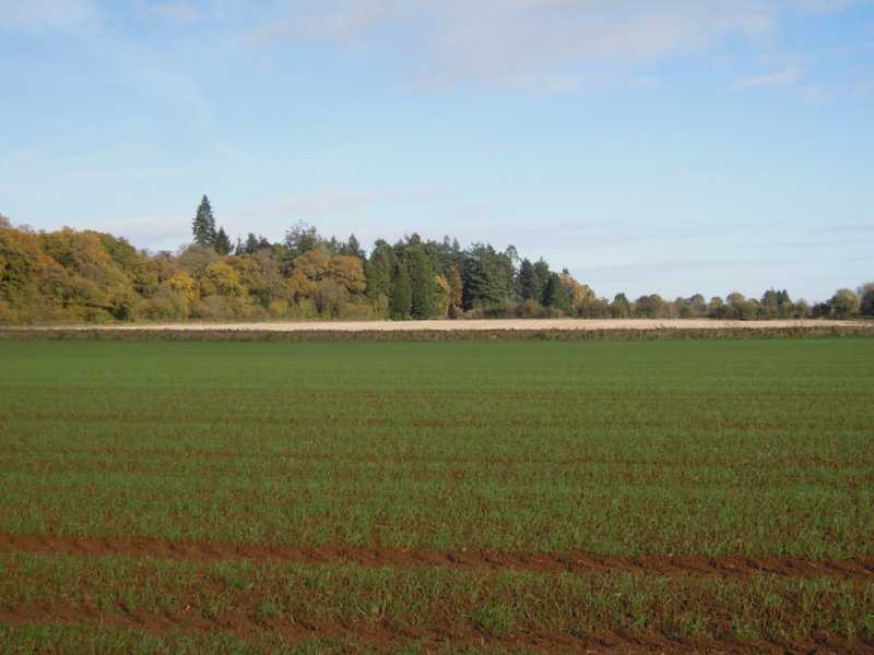 A fallow field in the distance