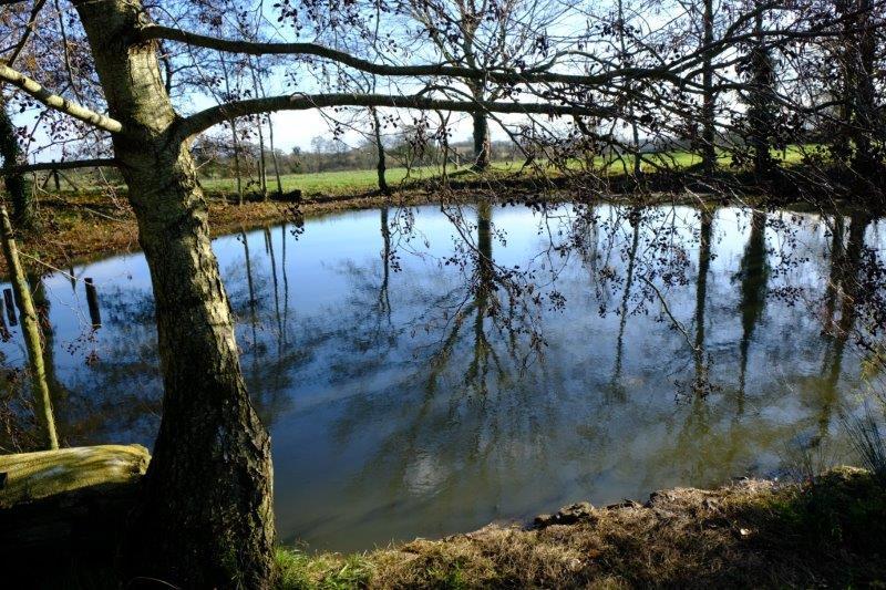 Past a pond