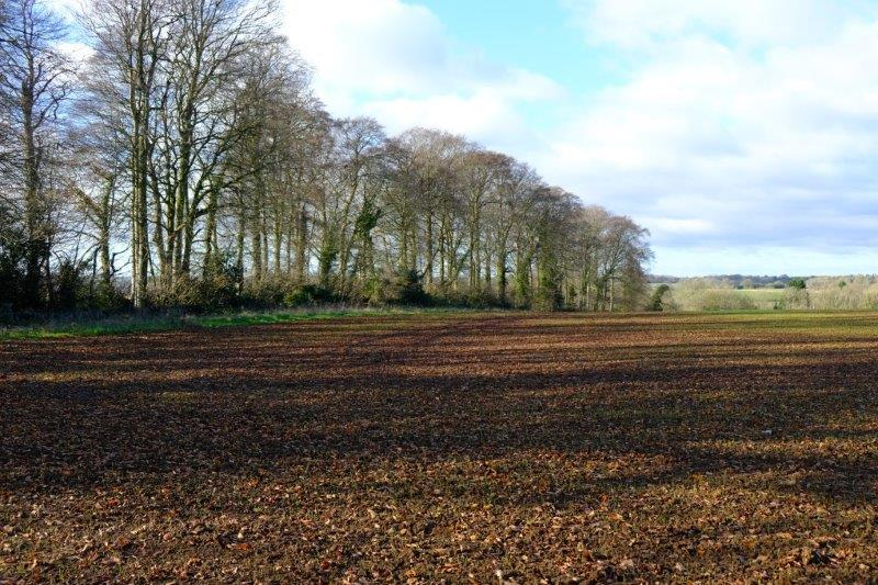 A field ready for crops to be planted