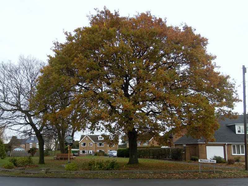 Upton St Leonards with its pictorial sign and spreading tree