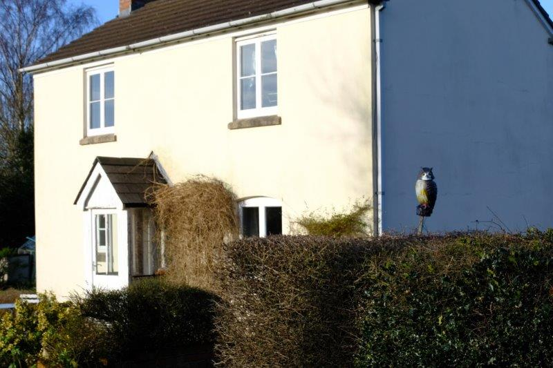 A cottage with an owl