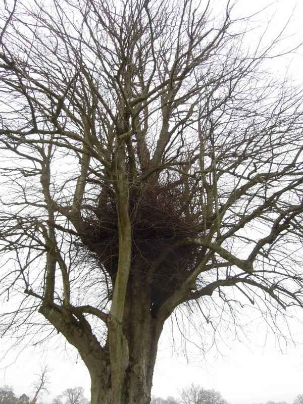 Is this a huge nest - perhaps not!