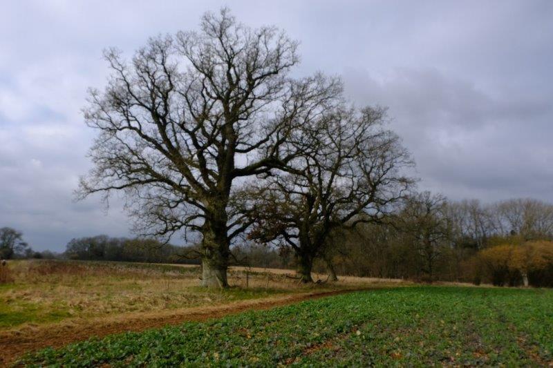 Imposing trees