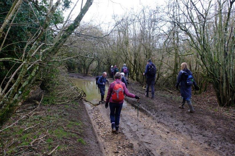 Carefully picking our way round a waterlogged lane