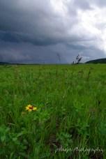 storm meadow