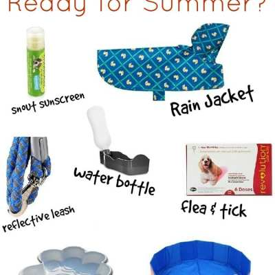 Is your Dog Ready for Summer?