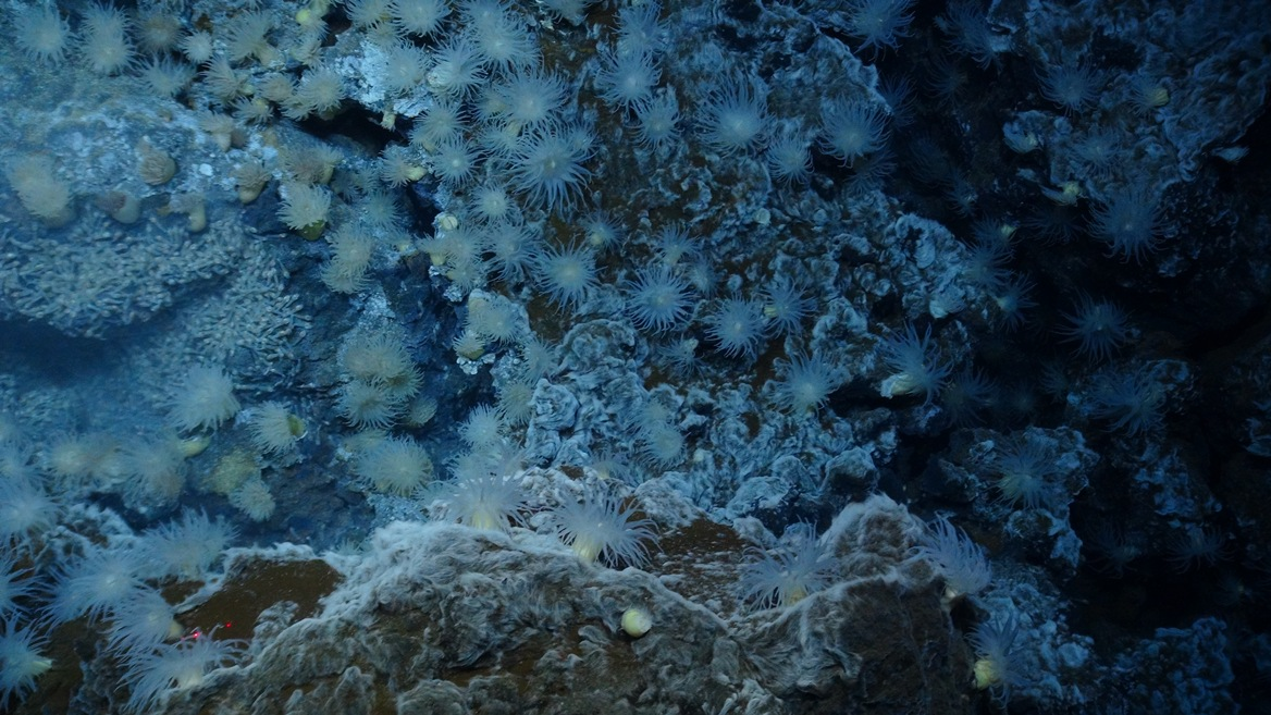 Chemosynthesis in deep sea vents