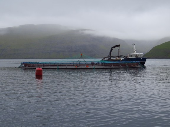 One of the net pens, out of 10 in an array in this fjord. Credit: Andrew Thaler